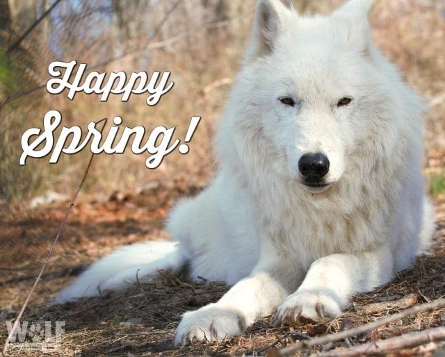 Happy_spring_2b_sm