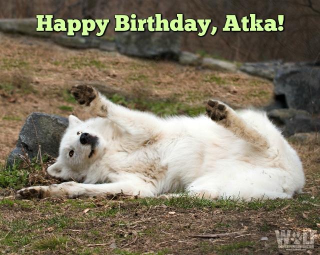 birthday_Atka_logo_blog