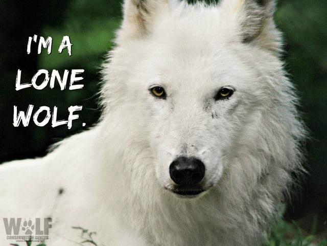 Lone_wolf_logo (2)SM