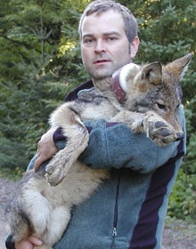 wolf_researcher_brent_with_wolf_pup