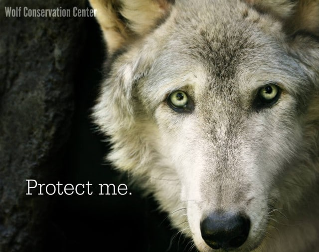 Lukas_protect