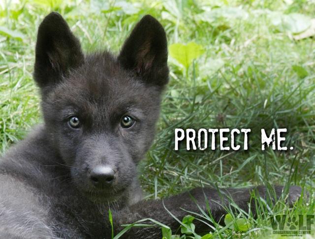 protect_pup_blog