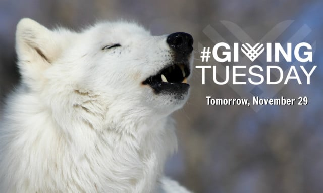 Giving_tuesday_email