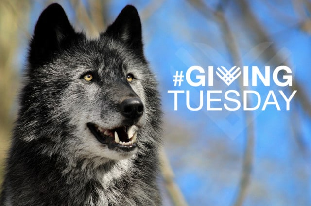 giving_tuesday_email_2