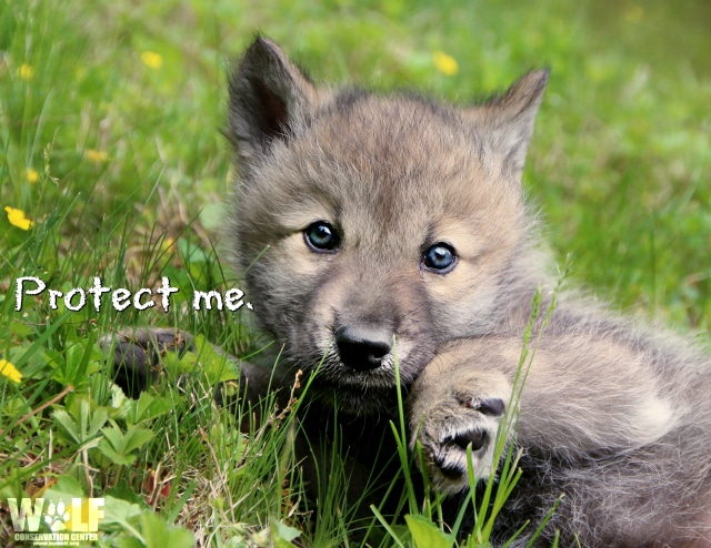 Protect_pup_me_logo_blog
