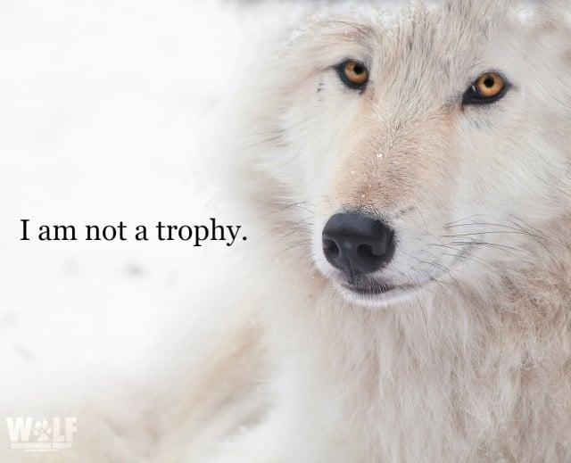 trophy_logo_14_sm
