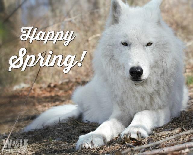 Happy_spring_2017_sm