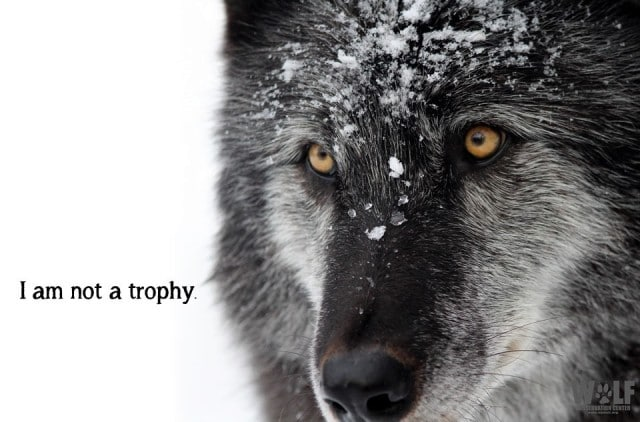 trophy_18 (2)