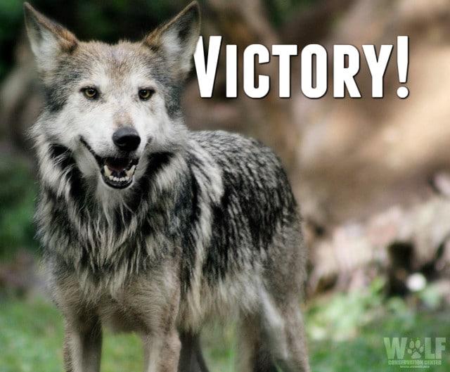 victory_lobo_logo_sm