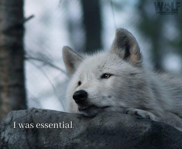 was_essential_logo_2_sm