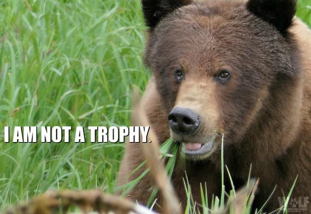 grizz_trophy