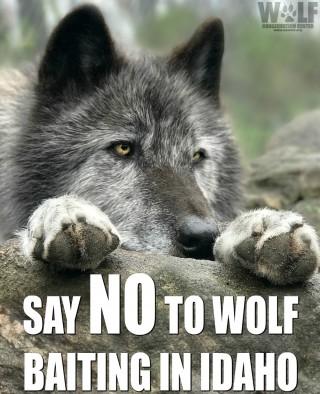 WOLF_BAITING_LOGO_SM