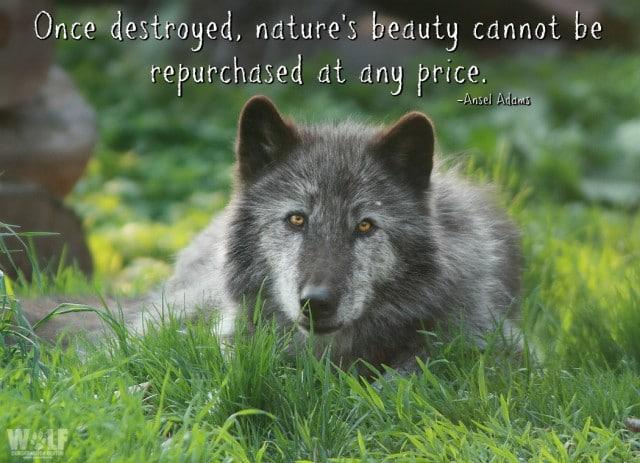 ansel_adams_quote_nature_logo_sm