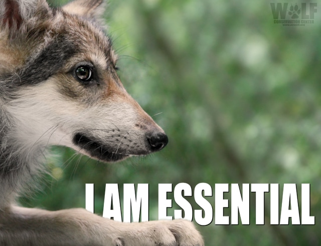 essential_pup_logo_blog
