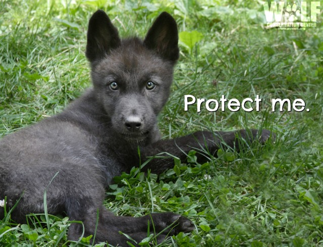 Protect_me_pup_logo_sm
