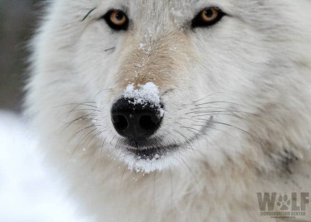smile_stare_logo_snow_nose_sm2