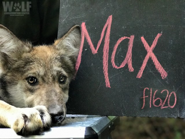 Max_logo_sm