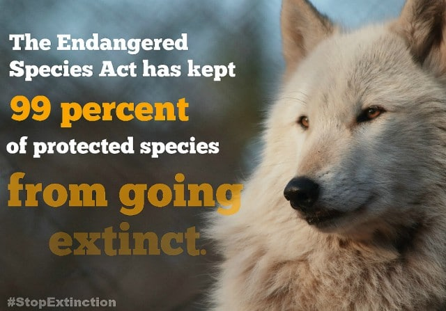 Stop_extinction_2_sm