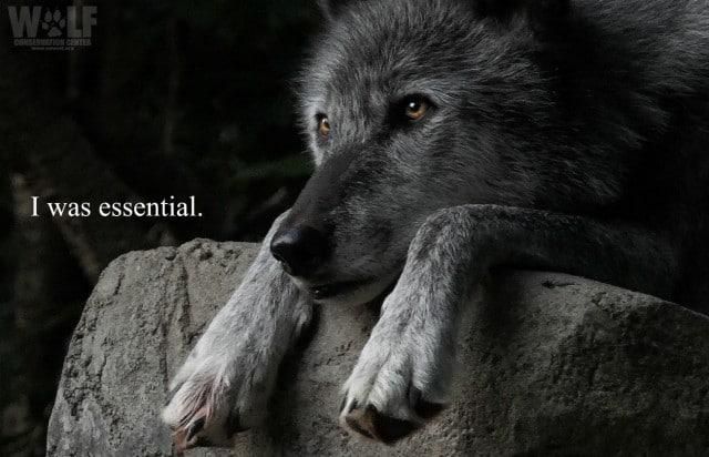 was_essential_logo_3_sm