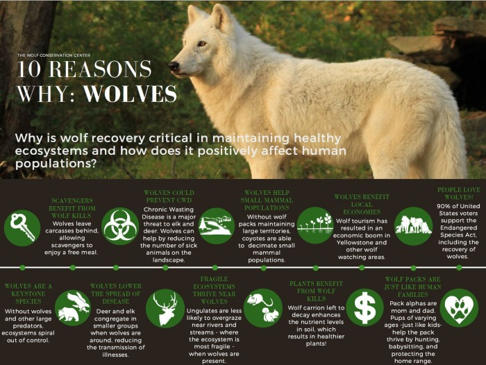 Why_wolves_flyer_photo