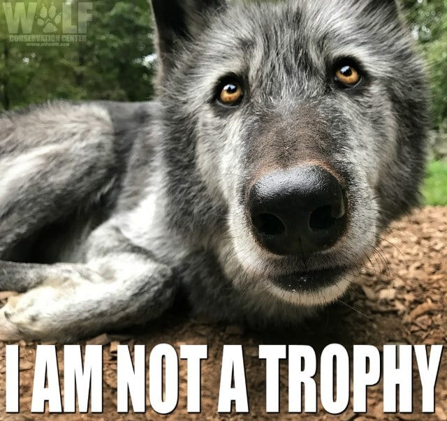 trophy_logo_22_sm