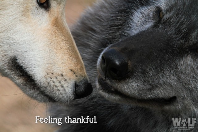 feeling_thankful_logo_sm