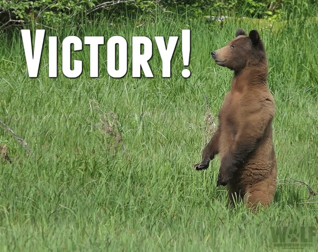 victory_grizzly_logo_sm