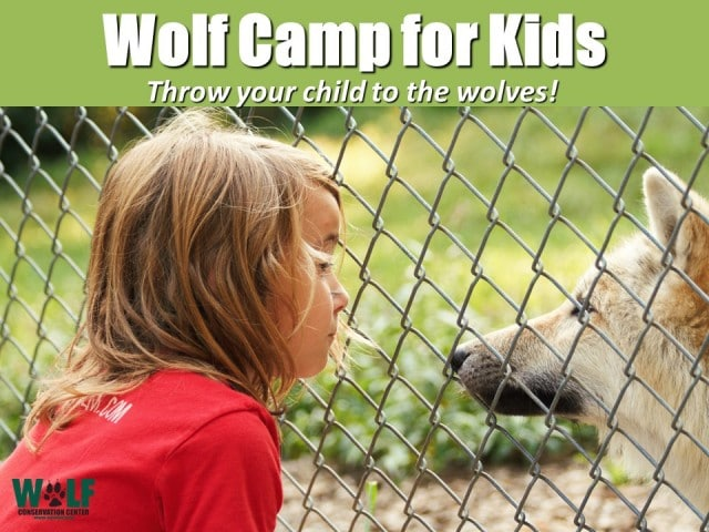 wolf camp for kids_5