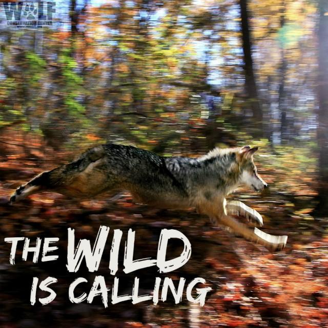 F810_blur_logo_edit_wild_calling_sm
