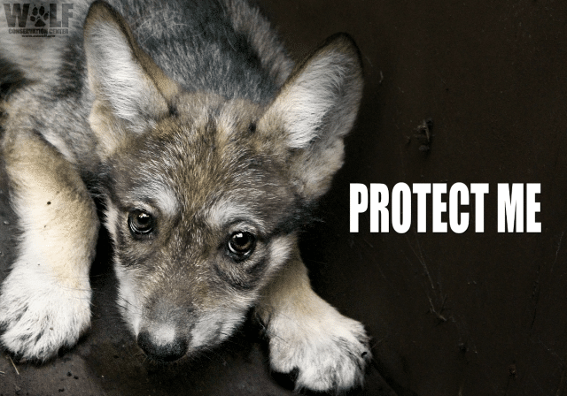 lobo_kb_edit_protect_me_logo_blog_png