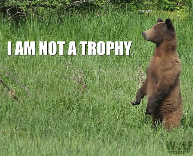 trophy_edit_logo_bear