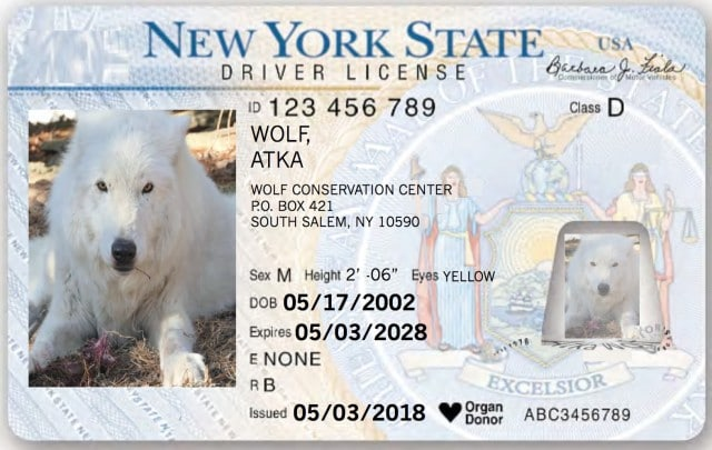 Atka Wolf ID