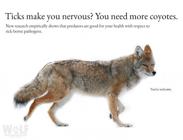 Coyote_ticks_logo_sm