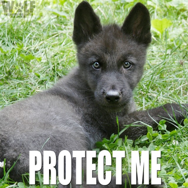 zephyr_pup_edit_protect_sm