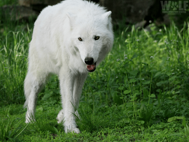 Atka_email_edit_sm_blog
