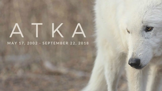 Atka_memorial_banner_email