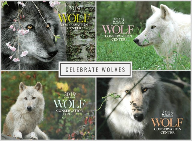 celebrate wolves all year long_blog