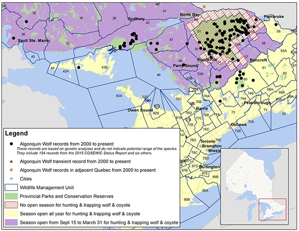 Distribution of recent Algonquin Wolf records in Ontario. (Source: Ontario Ministry of Natural Resources and Forestry)