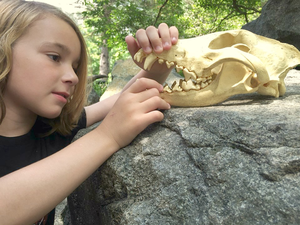 Eleanor Skull 2