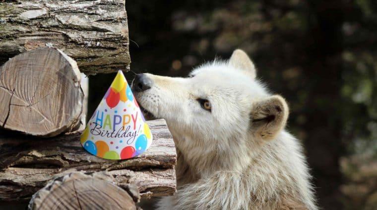 Alawa_birthday_hat