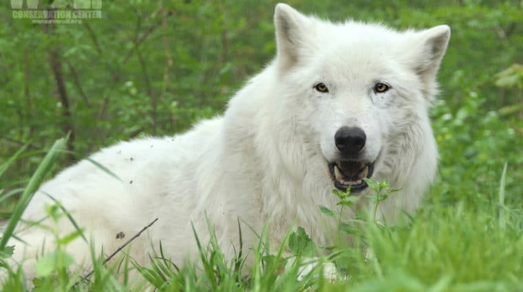 Remembering Atka on his Birthday