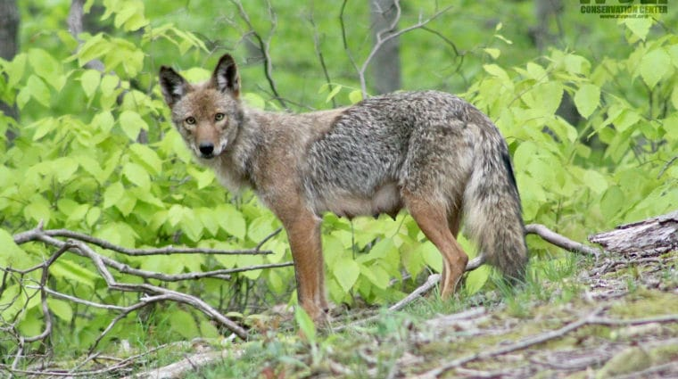 End Cruel Wildlife – Killing Contests in New York!