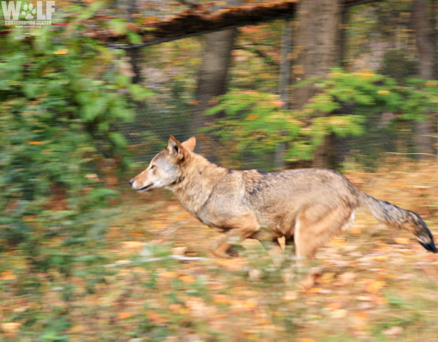 Wolf Conservation Center |
