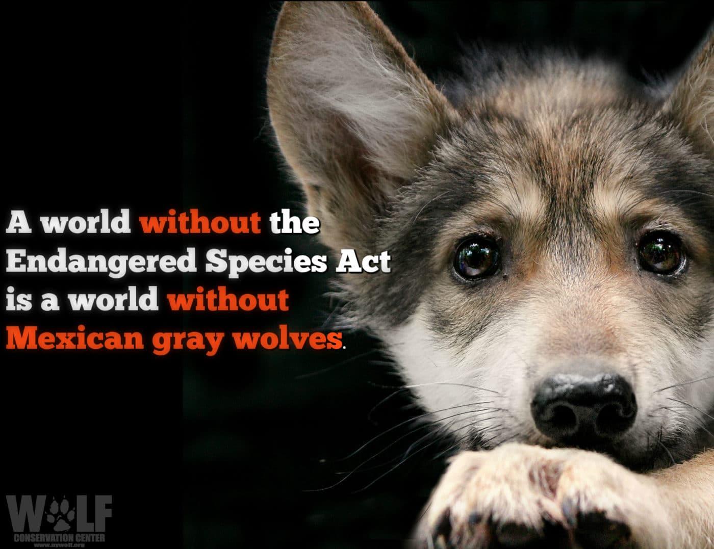 Interior Unveils New Rules to Weaken Endangered Species Act