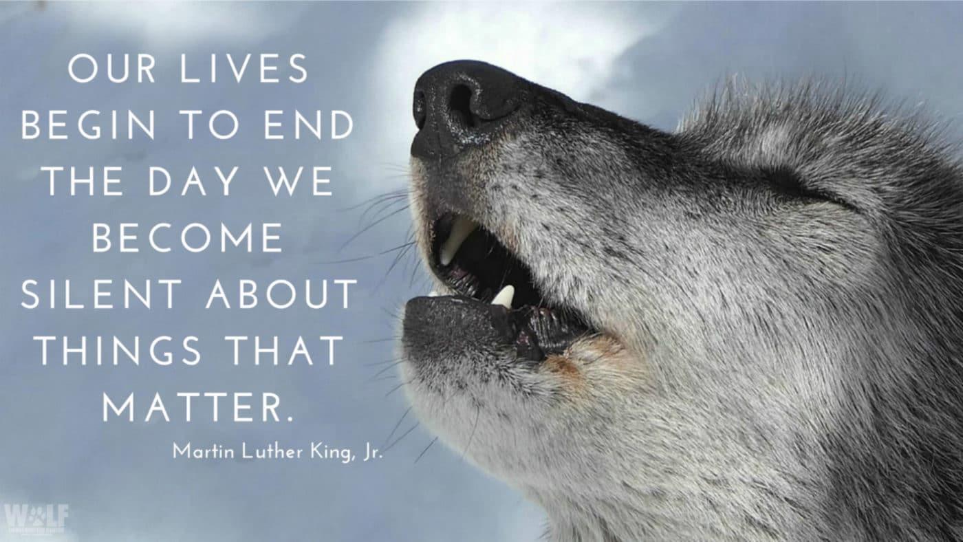 Keep Howling