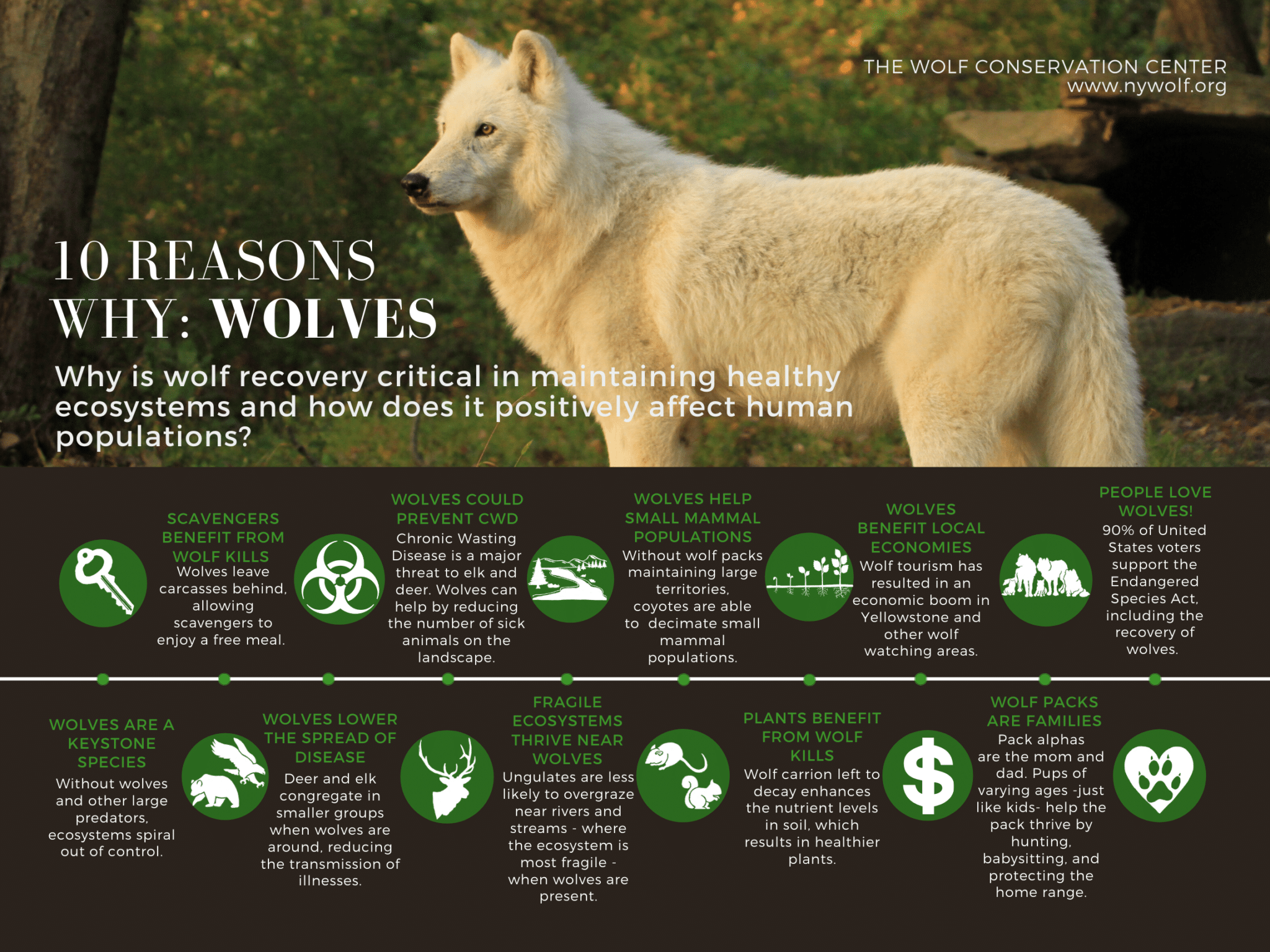 Wolves Keystone Species