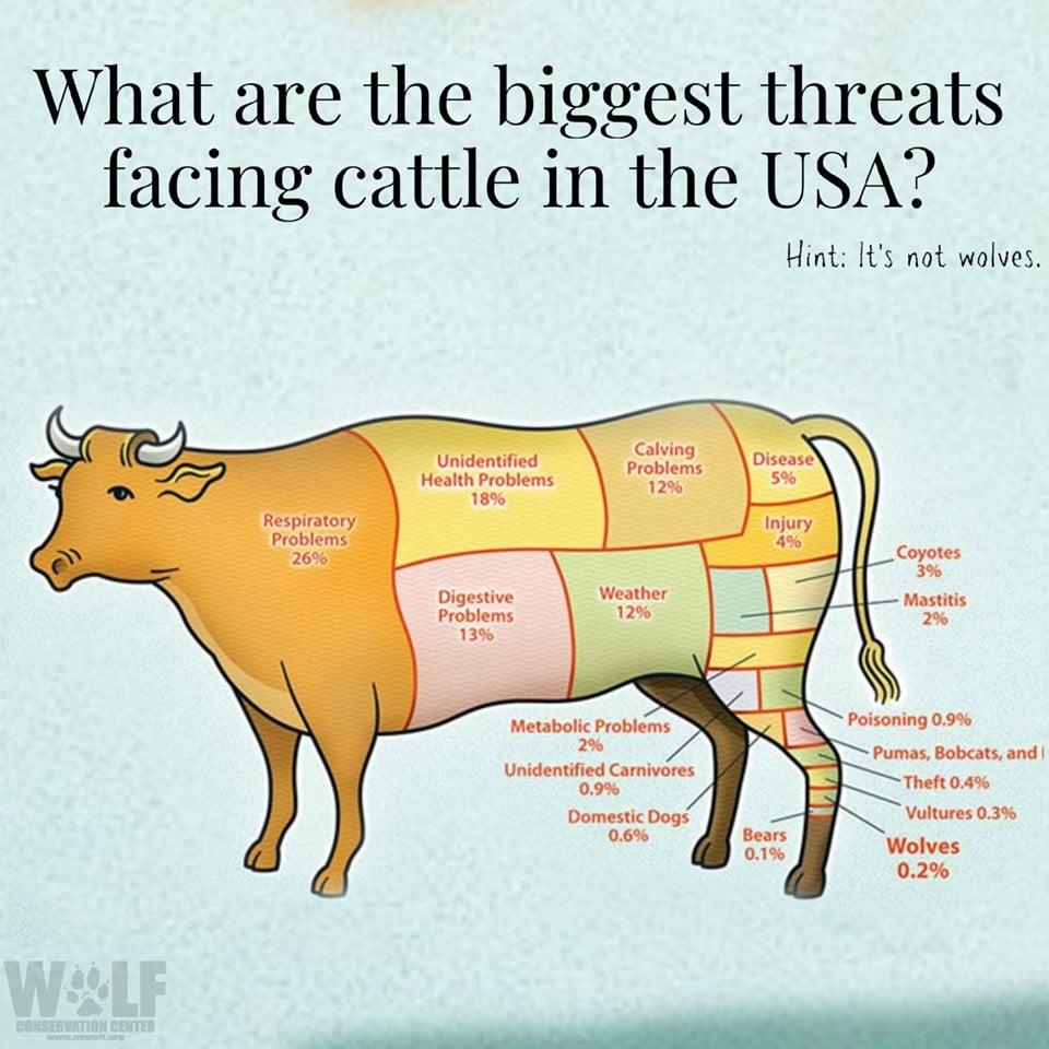 Cattlethreats