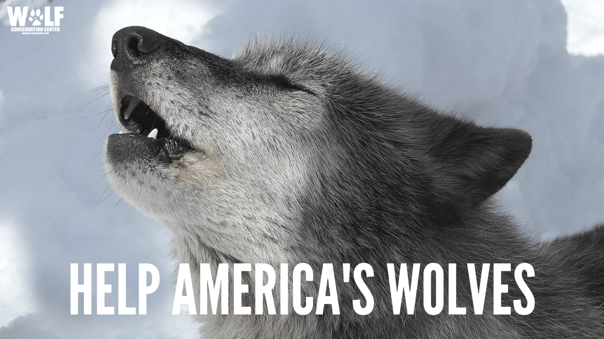 Savewolves