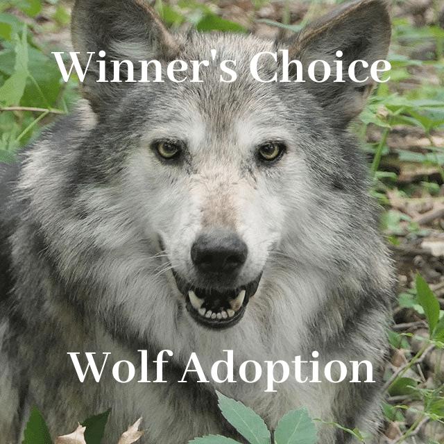 RLaW Adoption