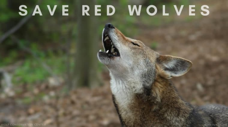 You Heard Our Howls – Thank You!